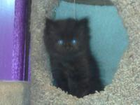 We have 5 kittens still available and ready to go to