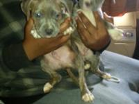 I have 2 boy pups left 8 wks old One is a tiger stripe