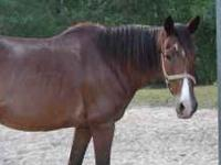 I have a wonderful Bay horse that is very gentle and