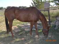 I have a gorgeous 8 year old TB gelding. He is