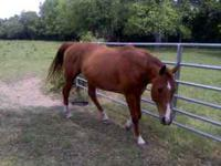 8 year old reigster barrel horse. I have had him for