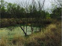 Acreage in Cotulla in La Salle County Texas. Graze