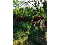 Acreage in Cotulla Texas. Graze cattle or hunt. Pond.