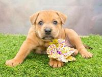 817's story Next Adoption Event: Saturday, September