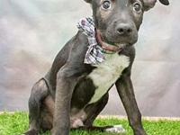 829's story Next Adoption Event: Saturday, September