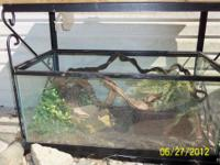 I have a black 215 gallon fish tank with 8 red belly