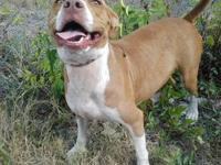 I have a 8 month male rednose pitbull that I am