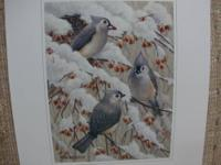 These beautiful prints of birds would look great framed