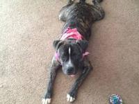 I need to rehome my 9 month old female pit bull The