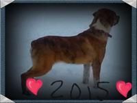 9 month old Catahoula pup. Up-to-date on shots &