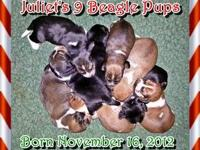 Juliet had 9 Thanksgiving puppies! Fat round