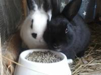 Read Ad i got 9 rabbits for sell if buy all rabbits