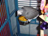 I have one African Grey Timneh that talks - says