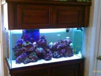 90 gallon saltwater glass aquarium with cherry oak