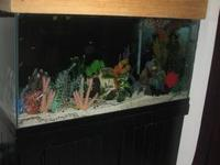 90 Gallon Fish Tank Set Up. Set up includes the Tank,