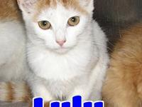 #98 Lulu's story 'Hi there. My name is Lulu and