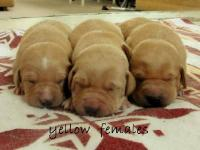 Pups will be ready to go around April 6th 2013,