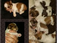 I have 5 babies available  1 female, 4 males They