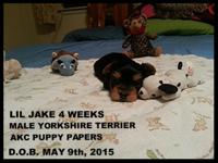 Jake is A.K.C. reg..male this price is for limited