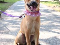 A-Lin, Spayed female, 5-months-old, 20-lbs  If you