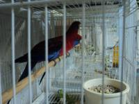Hi, my name is Vinh. These birds are a pair of a male