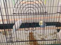 I have a pair of male parakeets very sweet and cute