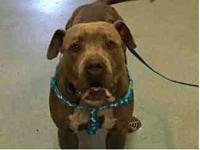A1852492 @SanDiegoCountyShelte's story *THIS DOG IS NOT