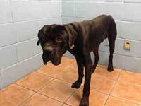 A5242430 @DowneyAnimalShelter's story *THIS DOG IS NOT