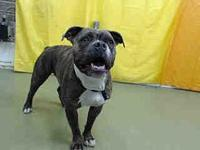 A706914 @ Devore Shelter's story *THIS DOG IS NOT IN
