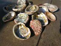 Approximately fifty abalone shells sold as a unit for