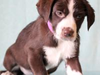 Abbey #9865 is an adorable 13-week-old female