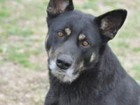 Abbie is a sweet girl in a small package. If you are