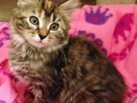 Abby is a sweet natured long-haired female kittycat.