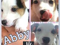 Abby's story Baby Abby! Check out her cute little