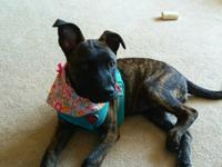 Meet Abby - a beautiful mixed breed who we believe is a