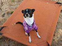 Abby's story Meet Abby! Abby was surrendered over to