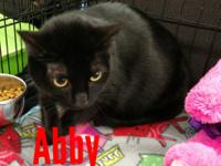 Abby is a shy, loving girl who just wants to sit by you