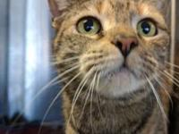 Abby's story Hello I am Abby, a 3 year old Domestic