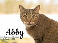 Abby's story If you are not viewing this adoption