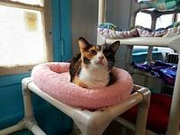 Abby's story Abby is a very calm and collected cat and
