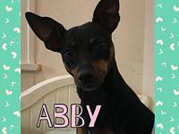 Abby's story Abby is a 5 year old min pin. She is
