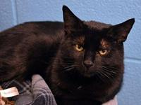 Abby *Special Adoption Fee's story I am declawed! All