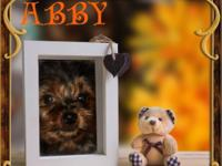 Hi! Im Abby! Im a super adorable Yorkie. I love to run