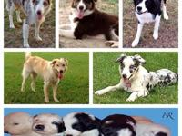 We are a small family breeder in Lake Charles,