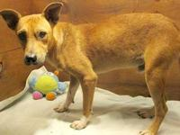 Abel's story 18-D08-046 Abel Breed: Terrier Mix Size: