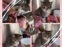 Abi's story Kittens that have not been spayed or