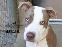 Abigail's story Abigail is a young adult bully mix who