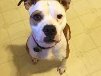 Name: Abigail  Breed: Pitbull mix Approximate Age: 5