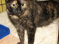 Abish (female kitten)'s story This is Abish a torti