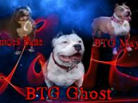 Ghost is a classic American bully with a pocket ped.